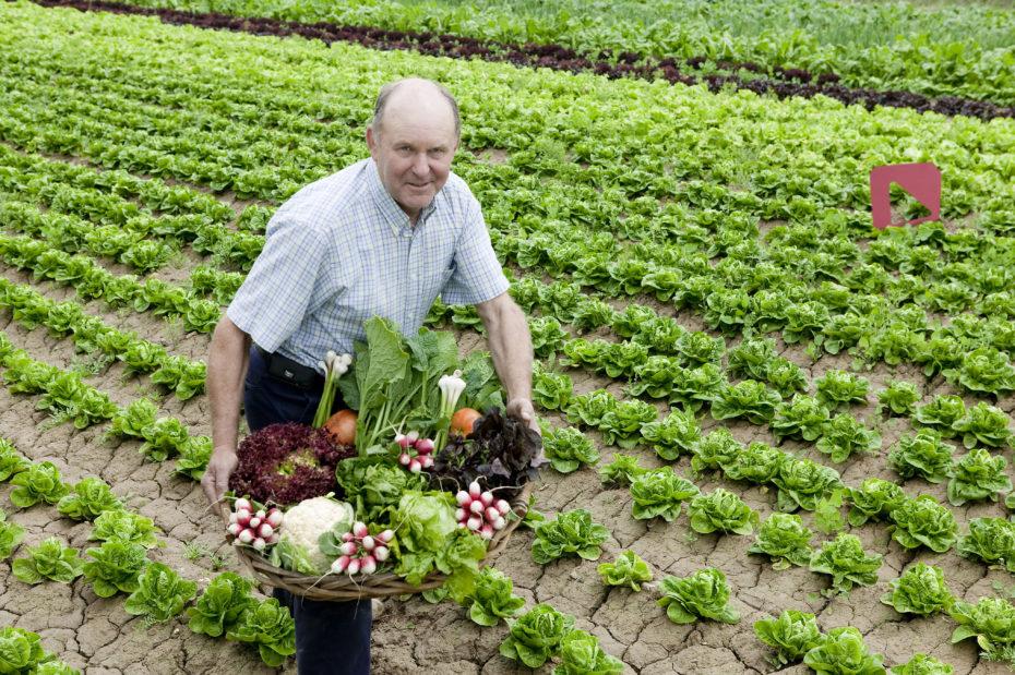 Tomás, der Gemüsebauer