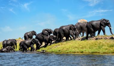 Ein eindrucksvolles Erlebnis: Elefantenbeobachtung bei der Flussdurchquerung