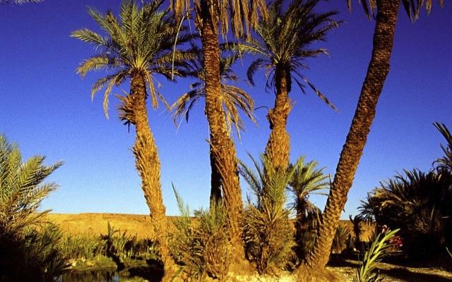 Palmenoase in der Wüste