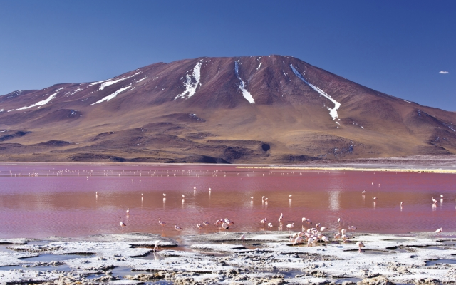 An der Laguna Colorada