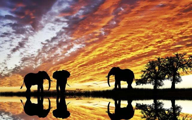 Stimmungsvoller Sonnenuntergang mit Elefanten