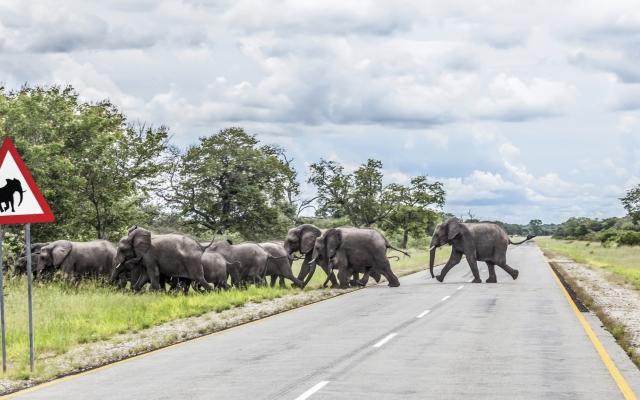 Vorfahrt für die Elefanten