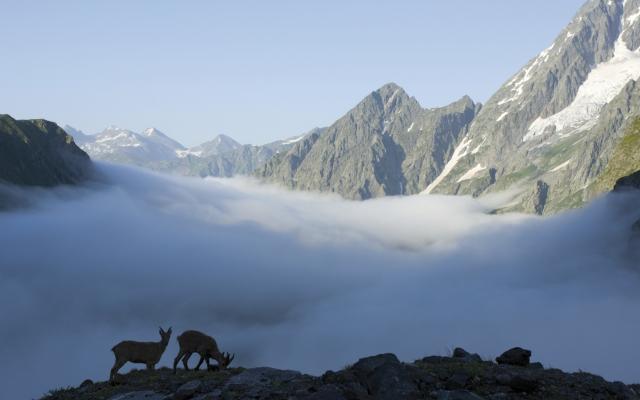 Wolkiger Tagesanbruch im Kaukasus mit Ziegen