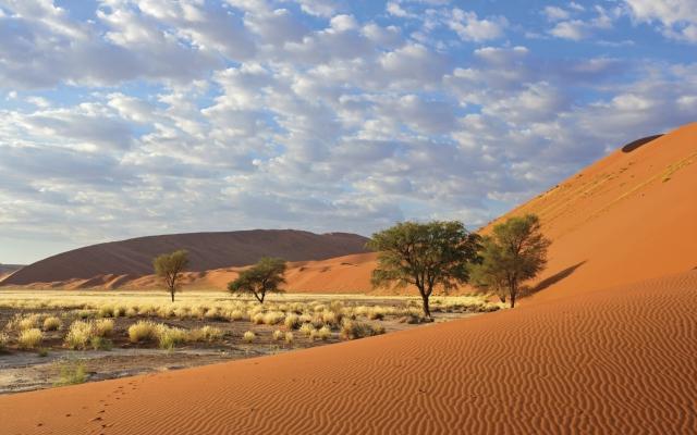 Die roten Dünen der Namib Wüste